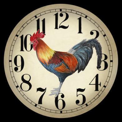 Fancy rooster Roman